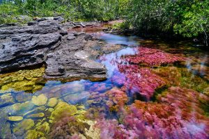 Caño Cristales River in Colombian