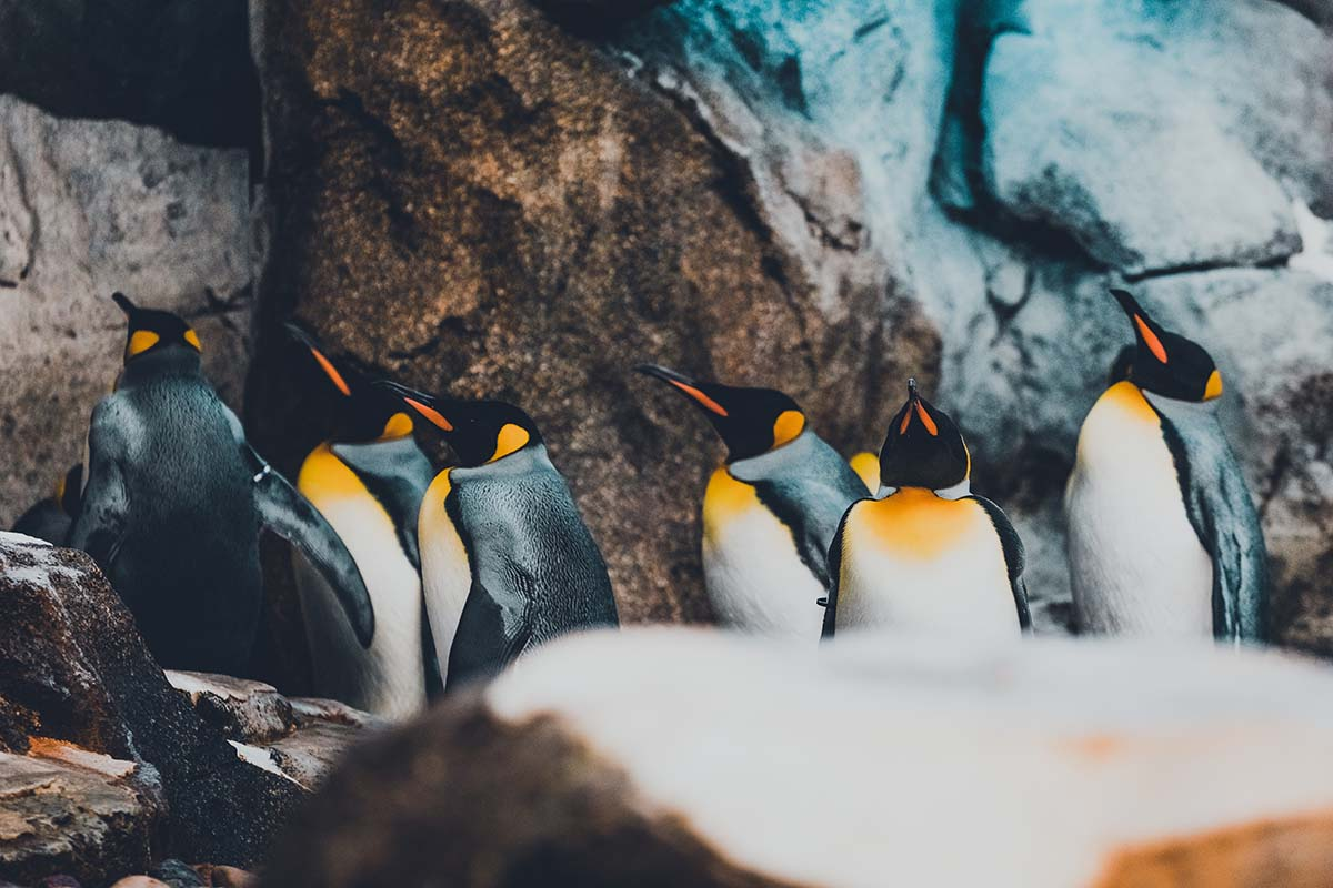 Explore the penguin sanctuary at the Calgary Zoo.