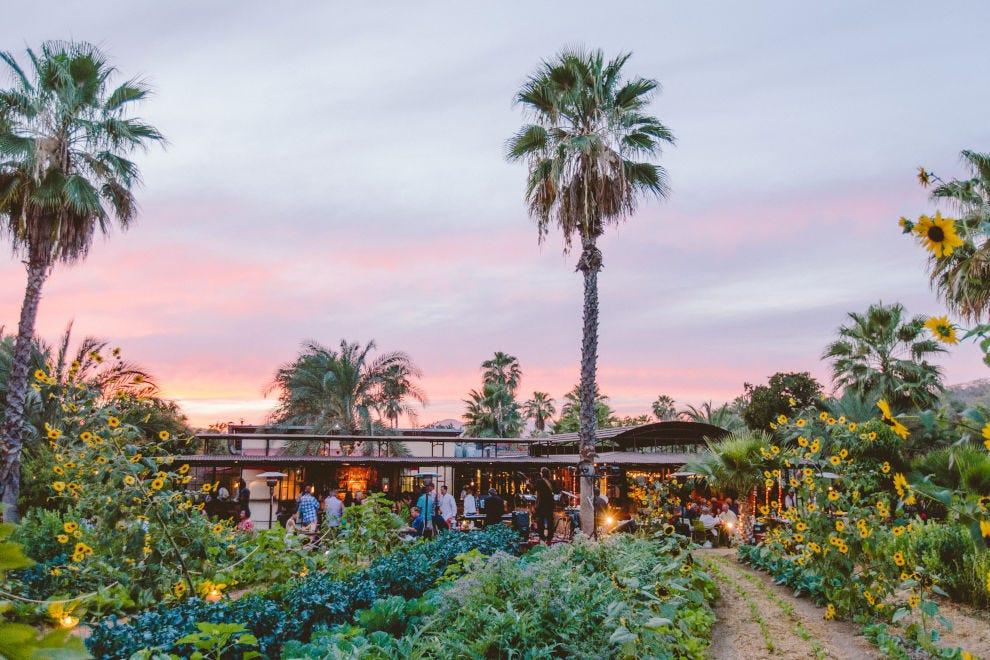 Flora Farms Los Cabos