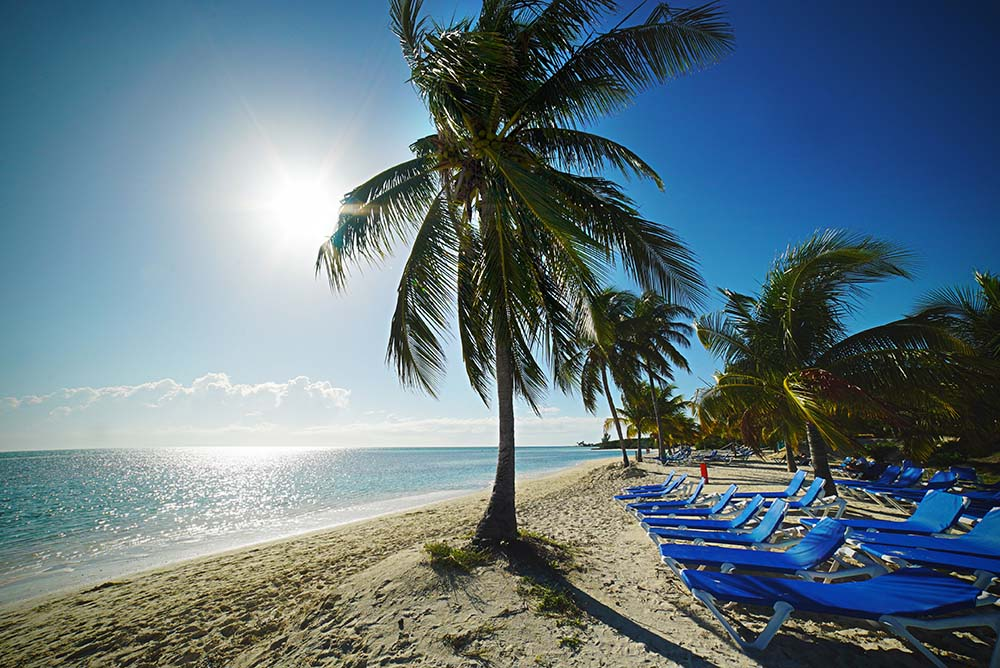 Palm trees at Jamaica all inclusive resort