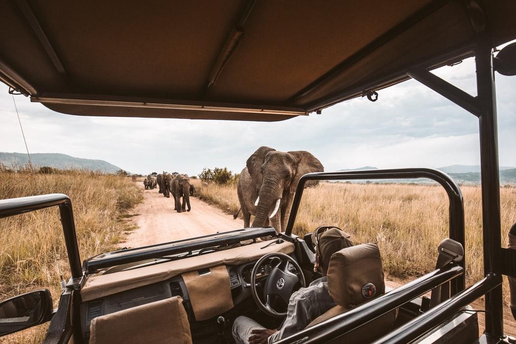 elephants walking beside a safari vehicle