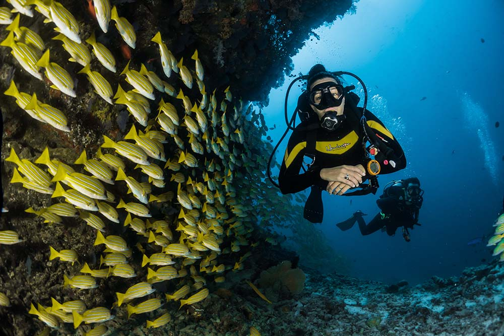 Scuba Diving in the Maldives.