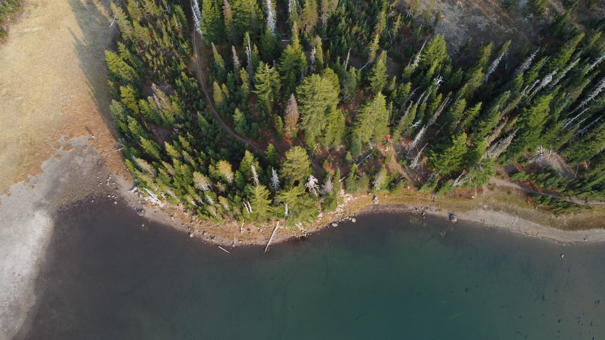 Overhead view of a forest meeting the ocean