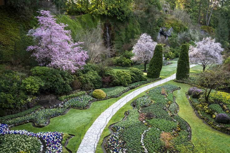 Best Places to see Cherry Blossoms in Canada, Victoria BC