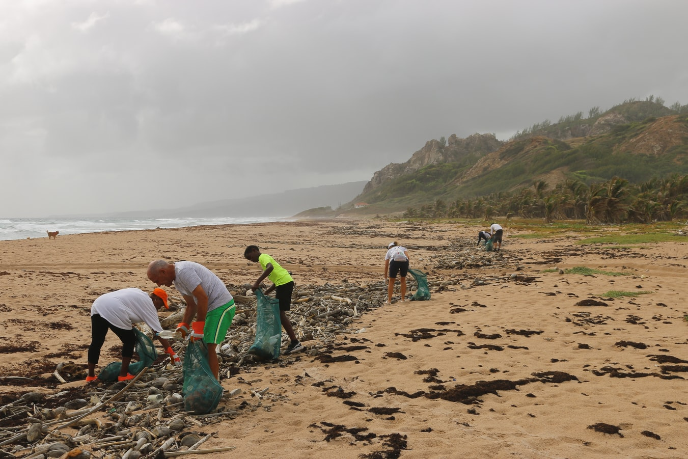 a group of people cleaning up trash on a beach