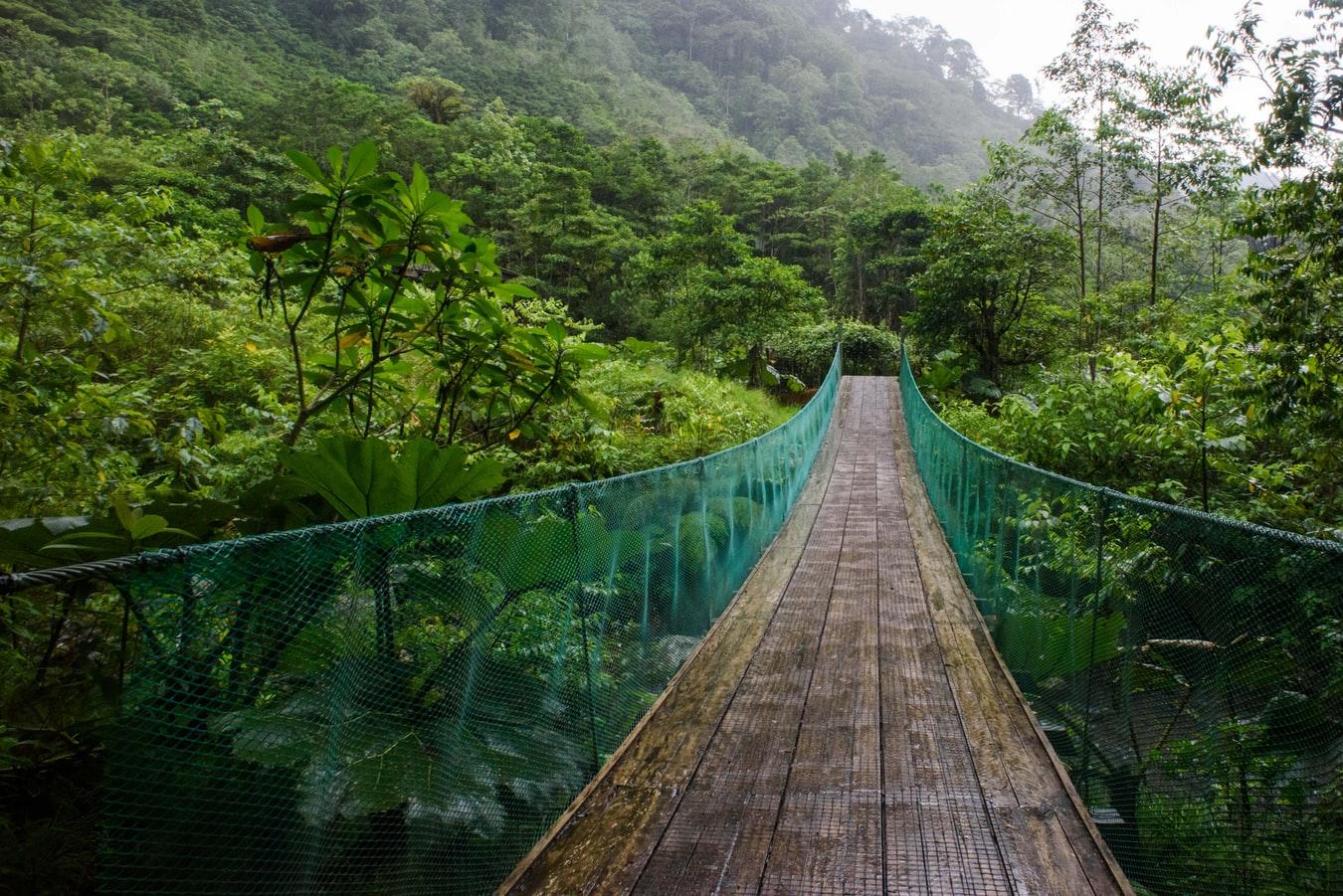 suspension bridge in a lush forest