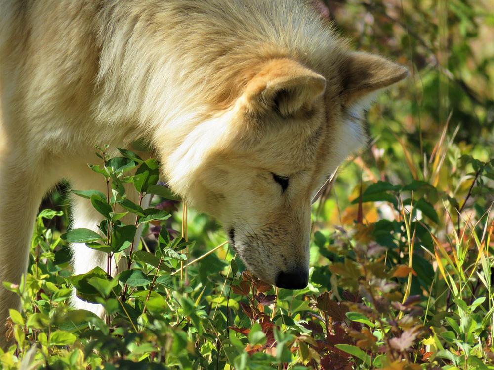 Alberta's Best Road Trip Routes - Wolfdog Sanctuary